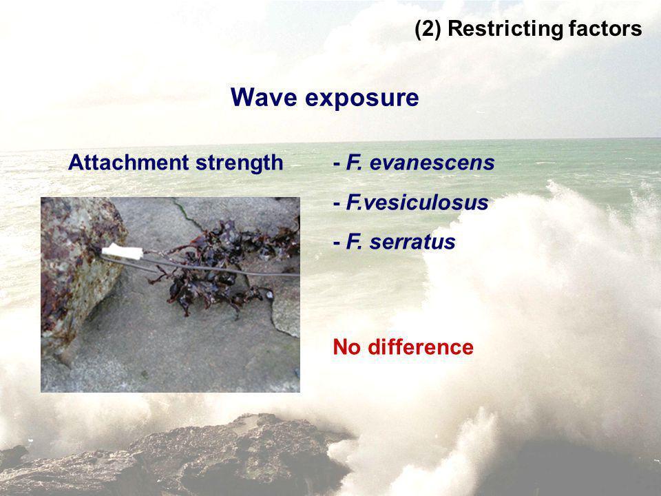 Wave exposure Attachment strength - F. evanescens - F.vesiculosus - F. serratus (2) Restricting factors No difference