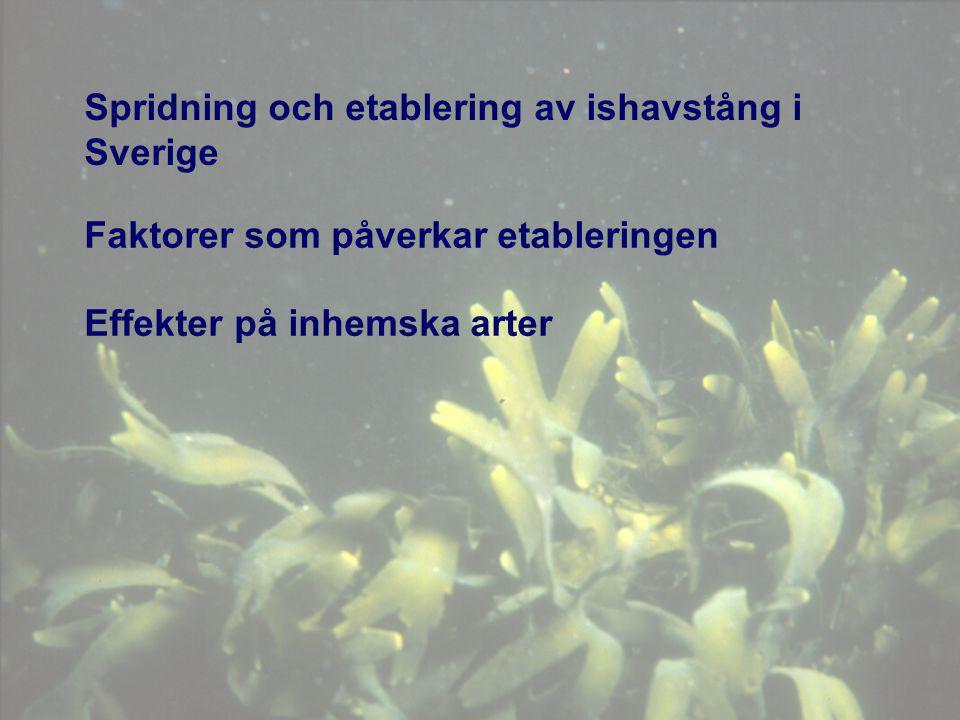 Spridning och etablering av ishavstång i Sverige Faktorer som påverkar etableringen Effekter på inhemska arter