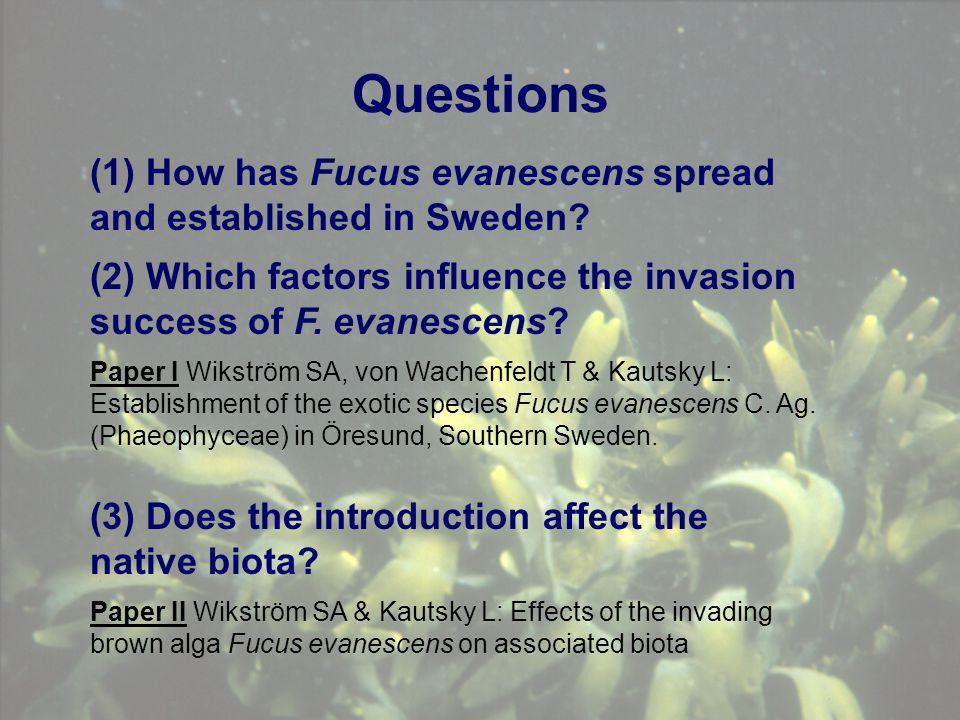 Questions Paper I Wikström SA, von Wachenfeldt T & Kautsky L: Establishment of the exotic species Fucus evanescens C. Ag. (Phaeophyceae) in Öresund, S
