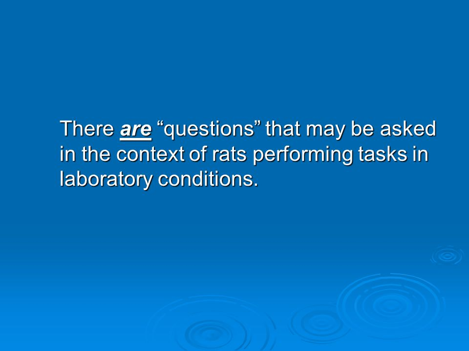 There are questions that may be asked in the context of rats performing tasks in laboratory conditions.