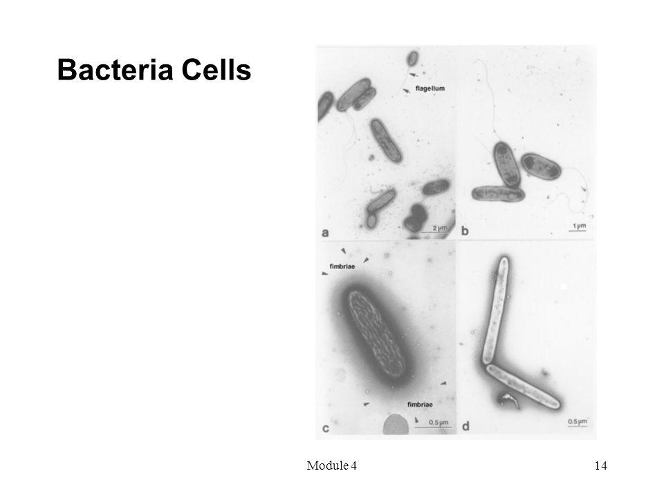 Module 414 Bacteria Cells