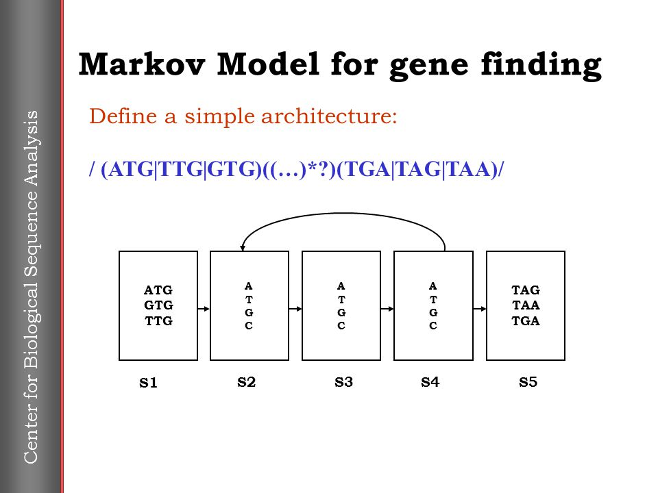 Center for Biological Sequence Analysis Markov Model for gene finding Define a simple architecture: / (ATG|TTG|GTG)((…)*?)(TGA|TAG|TAA)/ ATGCATGC TAG