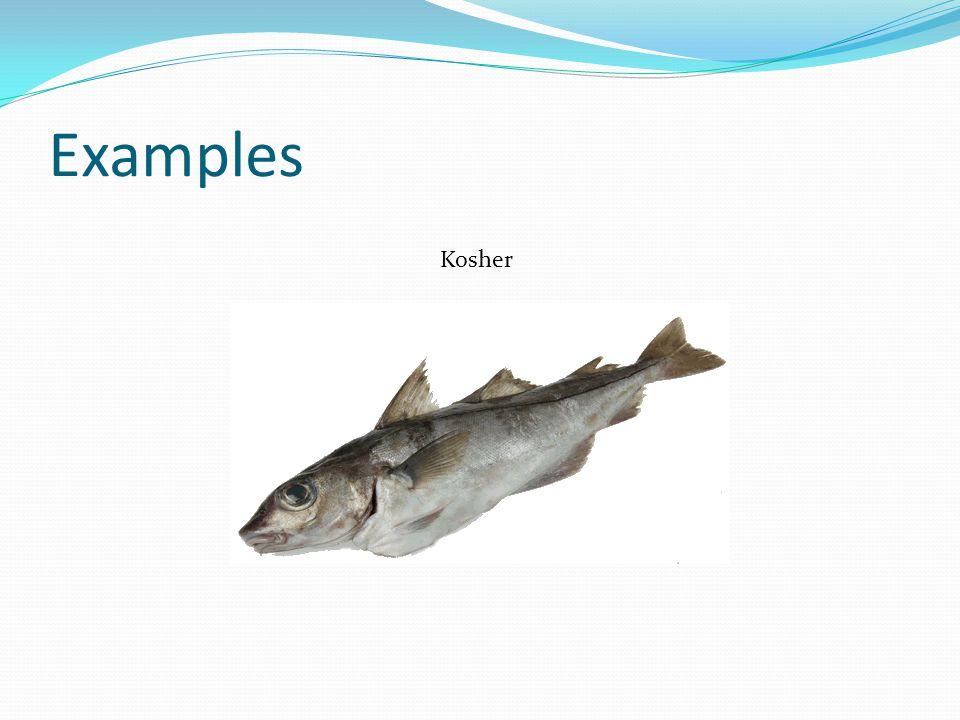 Examples Kosher