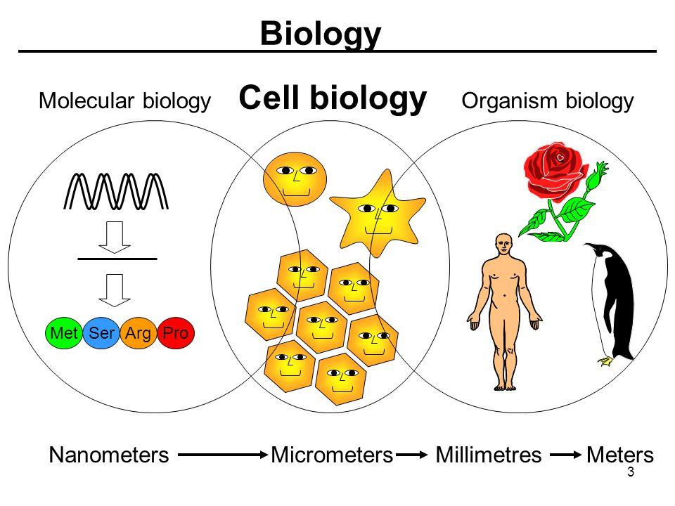 Biology Molecular biology Cell biology Organism biology MetSerArgPro NanometersMicrometersMillimetresMeters 3