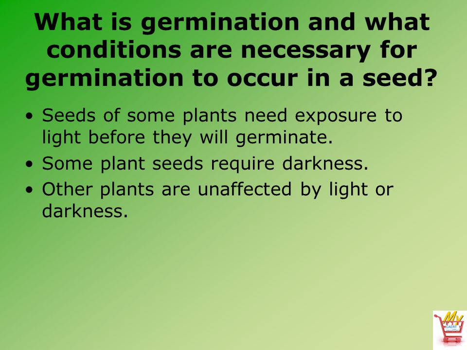 What is germination and what conditions are necessary for germination to occur in a seed? Seeds of some plants need exposure to light before they will