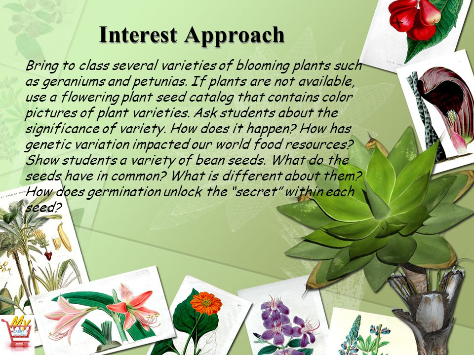 Interest Approach Bring to class several varieties of blooming plants such as geraniums and petunias. If plants are not available, use a flowering pla