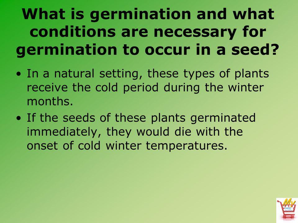 What is germination and what conditions are necessary for germination to occur in a seed? In a natural setting, these types of plants receive the cold