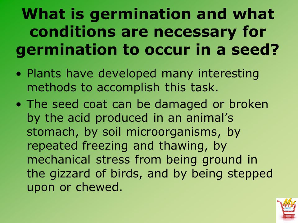 What is germination and what conditions are necessary for germination to occur in a seed? Plants have developed many interesting methods to accomplish