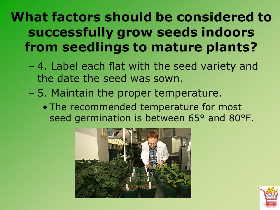 What factors should be considered to successfully grow seeds indoors from seedlings to mature plants? –4. Label each flat with the seed variety and th