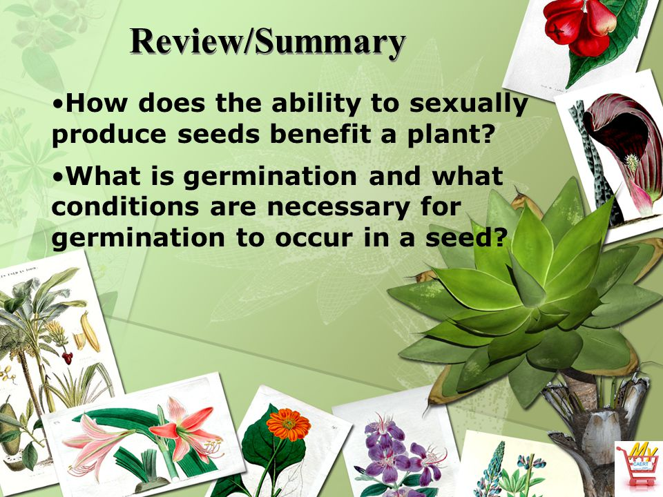 Review/Summary How does the ability to sexually produce seeds benefit a plant? What is germination and what conditions are necessary for germination t
