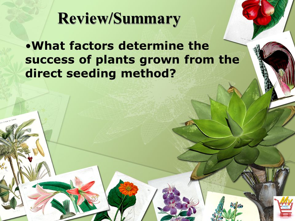 Review/Summary What factors determine the success of plants grown from the direct seeding method?