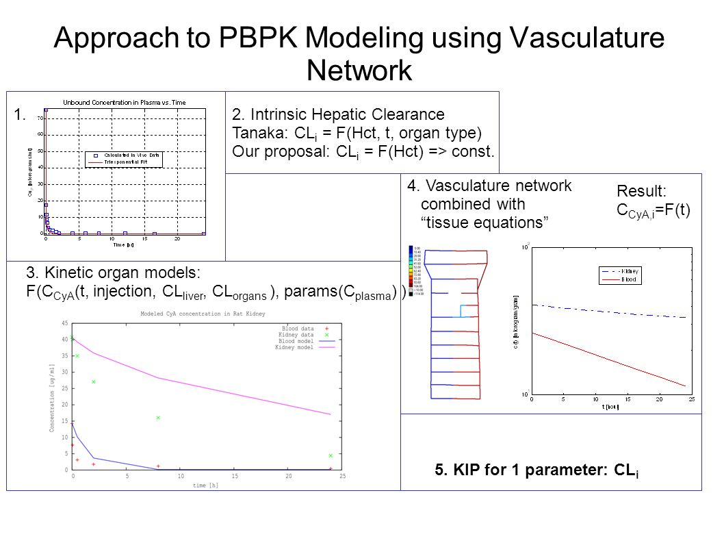 Approach to PBPK Modeling using Vasculature Network 1.2.