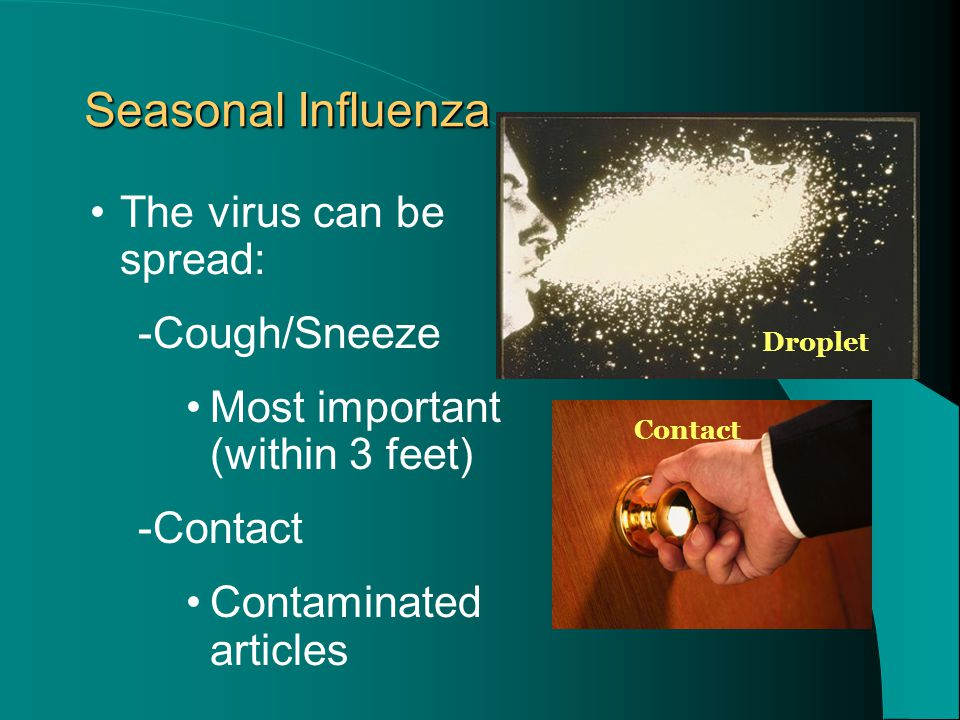 The virus can be spread: -Cough/Sneeze Most important (within 3 feet) -Contact Contaminated articles Seasonal Influenza Droplet Contact
