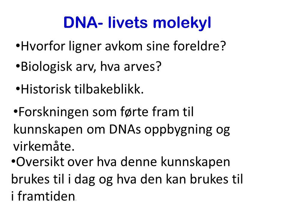 DNA- livets molekyl Hvorfor ligner avkom sine foreldre.
