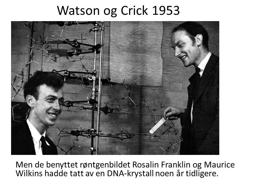 Watson og Crick 1953 Men de benyttet røntgenbildet Rosalin Franklin og Maurice Wilkins hadde tatt av en DNA-krystall noen år tidligere.