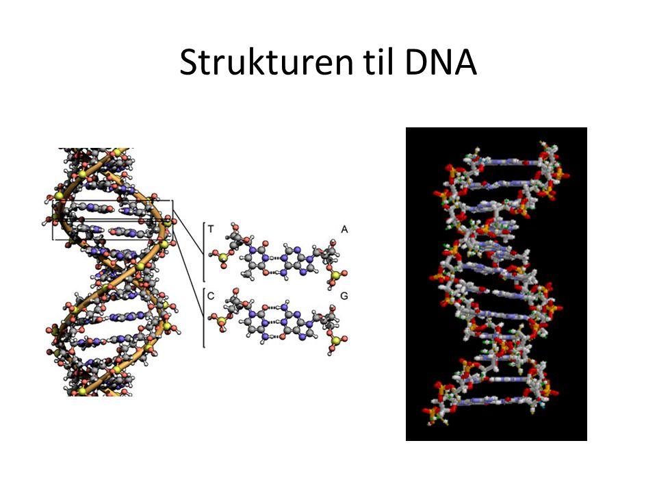 Strukturen til DNA
