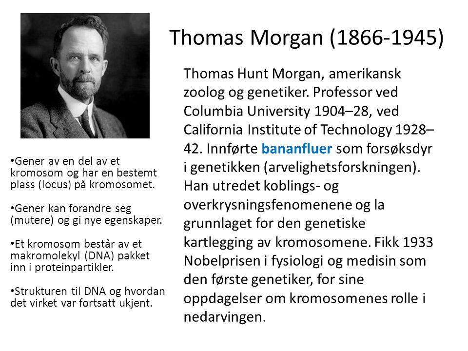 Thomas Morgan (1866-1945) Thomas Hunt Morgan, amerikansk zoolog og genetiker.