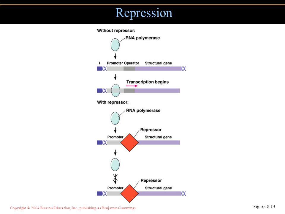 Copyright © 2004 Pearson Education, Inc., publishing as Benjamin Cummings Repression Figure 8.13