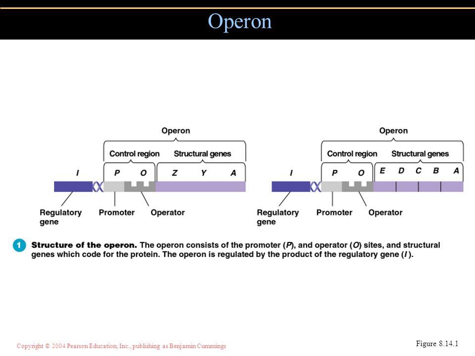 Copyright © 2004 Pearson Education, Inc., publishing as Benjamin Cummings Operon Figure 8.14.1