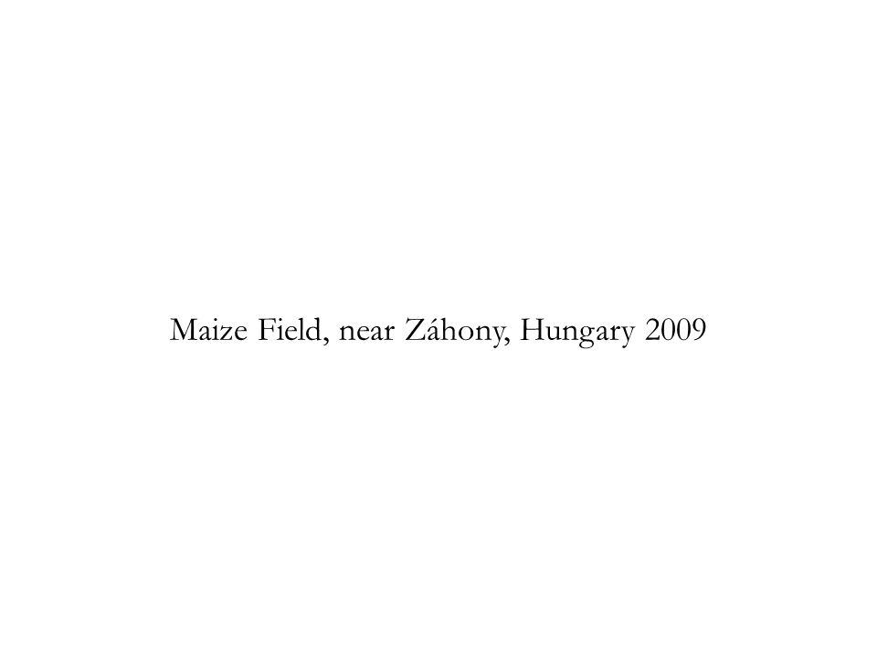 Maize Field, near Záhony, Hungary 2009