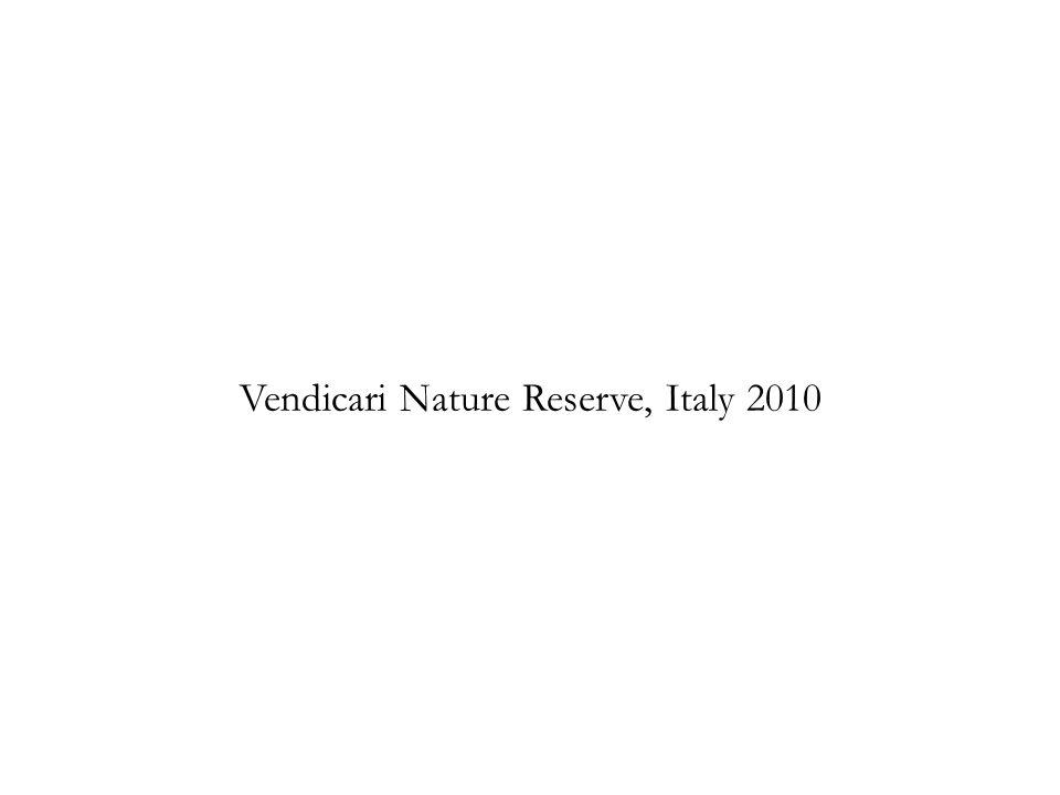 Vendicari Nature Reserve, Italy 2010