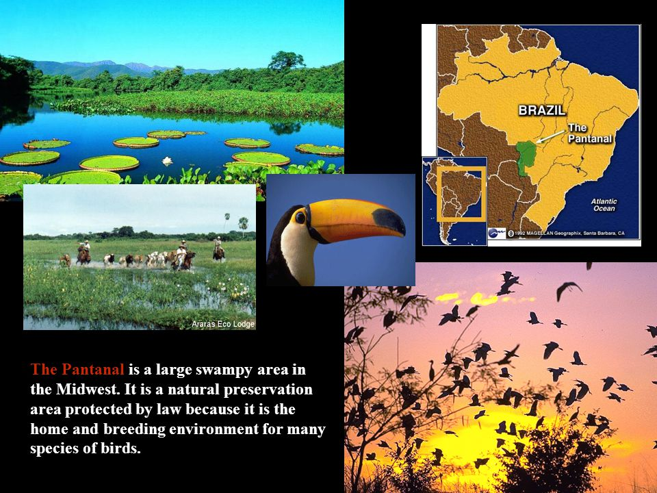 The Pantanal is a large swampy area in the Midwest.