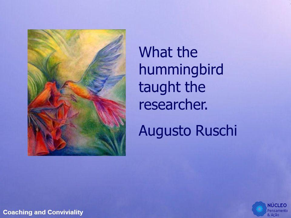 NÚCLEO Pensamento & Ação Coaching and Conviviality What the hummingbird taught the researcher.
