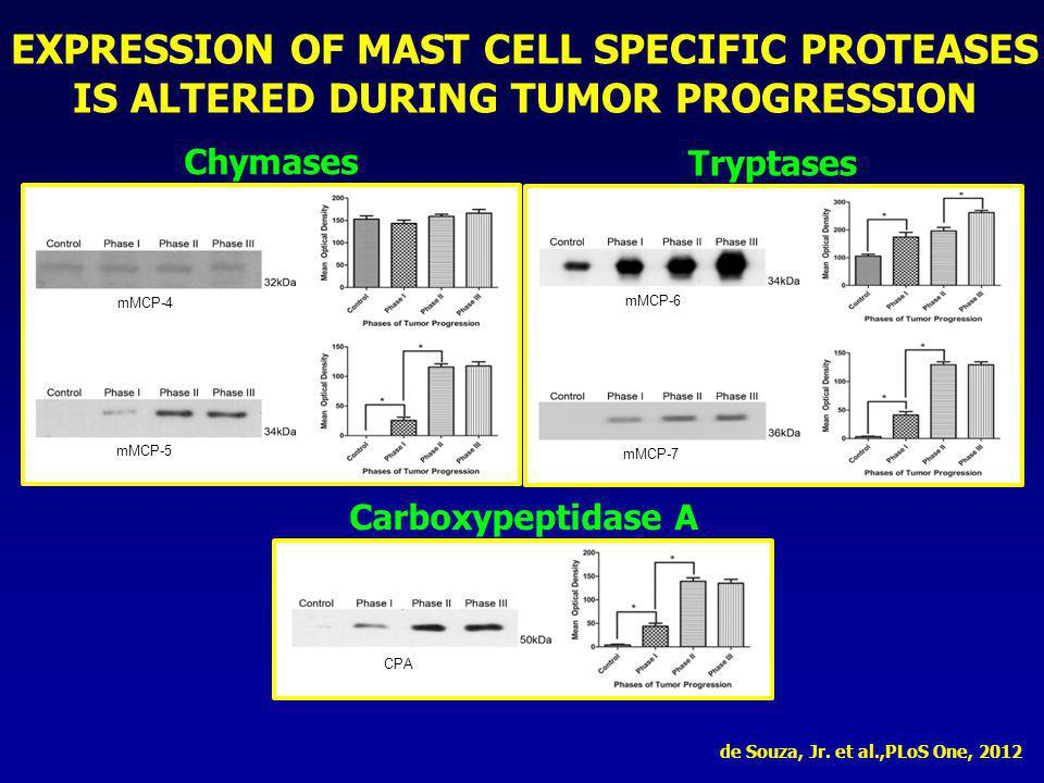 EXPRESSION OF MAST CELL SPECIFIC PROTEASES IS ALTERED DURING TUMOR PROGRESSION Chymases mMCP-4 mMCP-5 Tryptases mMCP-6 mMCP-7 Carboxypeptidase A CPA d