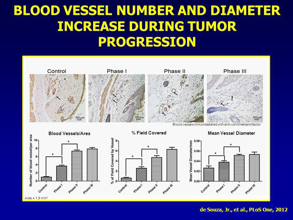 BLOOD VESSEL NUMBER AND DIAMETER INCREASE DURING TUMOR PROGRESSION Blood vessels immunolabeled with anti-vonWillebrand factor Area = 1.9 mm 2 Blood Ve