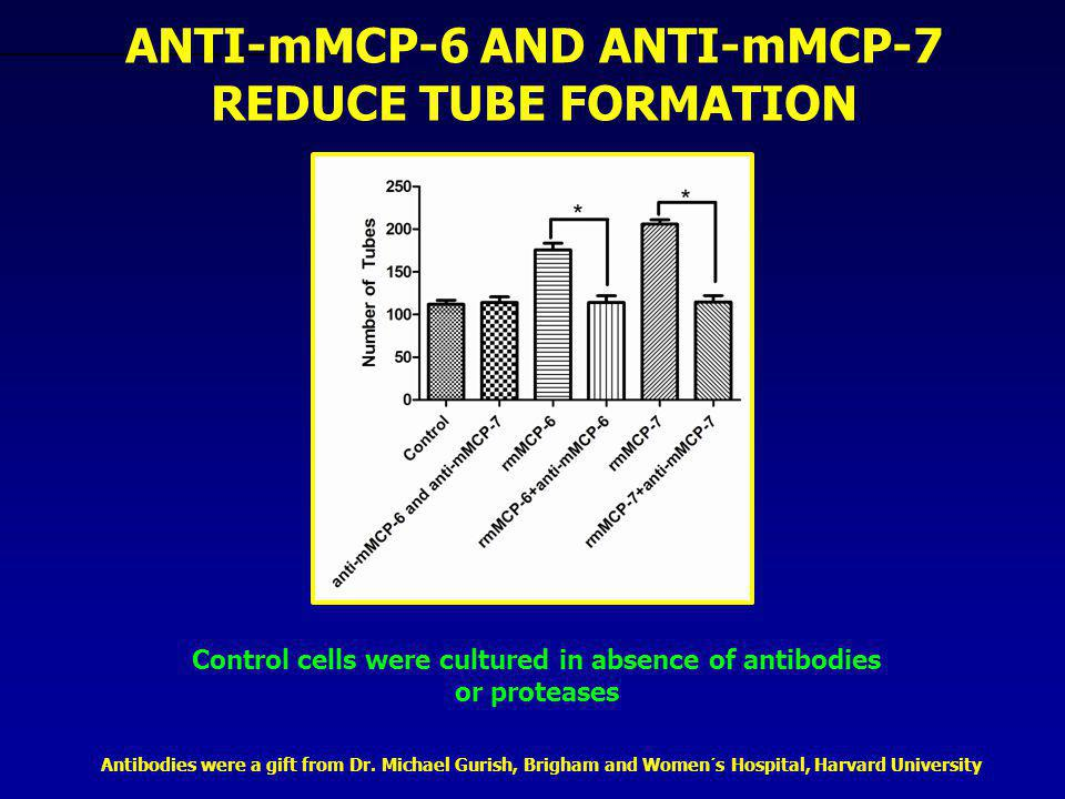 Control cells were cultured in absence of antibodies or proteases ANTI-mMCP-6 AND ANTI-mMCP-7 REDUCE TUBE FORMATION Antibodies were a gift from Dr. Mi