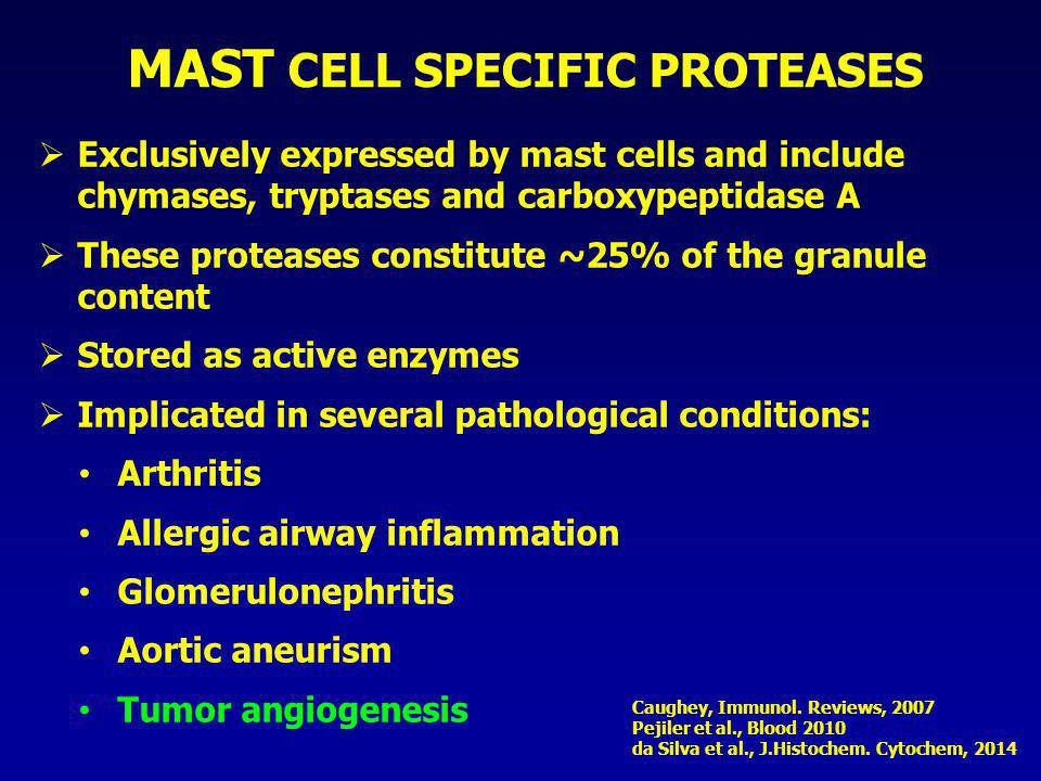 MAST CELL SPECIFIC PROTEASES  Exclusively expressed by mast cells and include chymases, tryptases and carboxypeptidase A  These proteases constitute