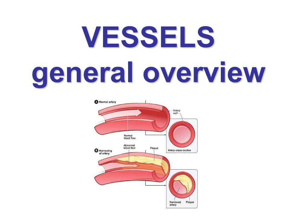 Development of venous system