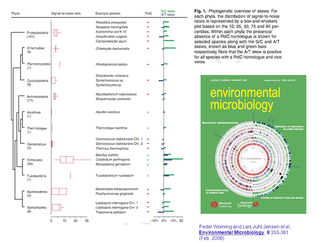 Comparative Microbial Genomics group Center for Biological Sequence Analysis The Technical University of Denmark DTU Peder Worning and Lars Juhl Jensen et al., Environmental Microbiology, 8:353-361 (Feb.