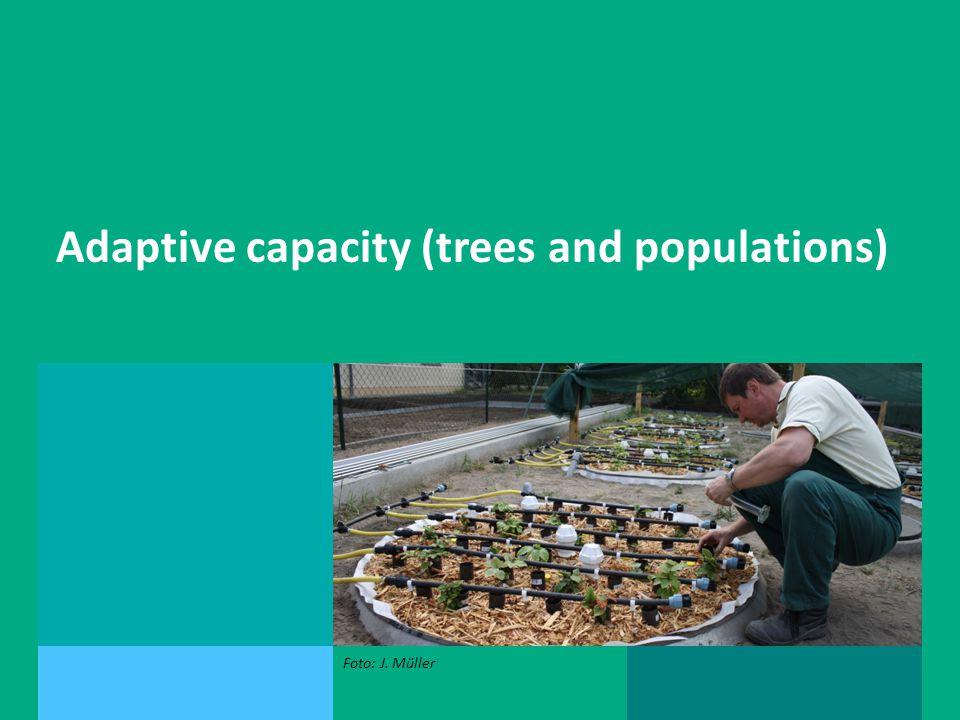 Andreas Bolte, Peter Spathelf, Ernst van der Maaten Adaptive capacity (trees and populations) Foto: J.