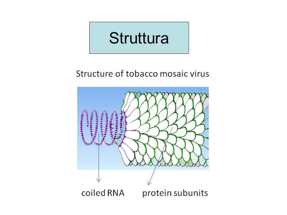 Inibitori nucleosidici della transcrittasi inversa