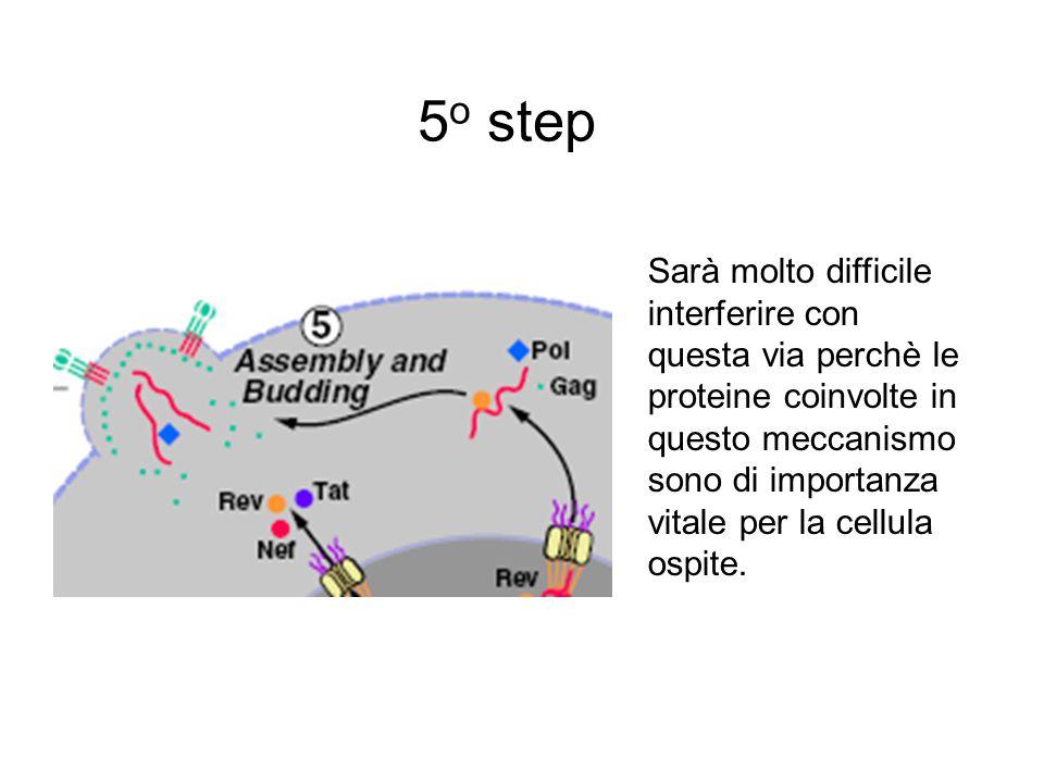 5 o step Sarà molto difficile interferire con questa via perchè le proteine coinvolte in questo meccanismo sono di importanza vitale per la cellula ospite.