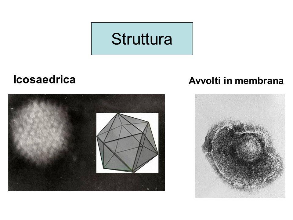 Inibitori nucleotidici della transcrittasi inversa Farmaci: - Tenofovir Quando una cellula viene infettata da retrovirus, l'RNA viene copiato in una molecola di DNA a doppio filamento proprio grazie alla trascrittasi inversa presente nel virione che entra nella cellula infettata assieme all'RNA.