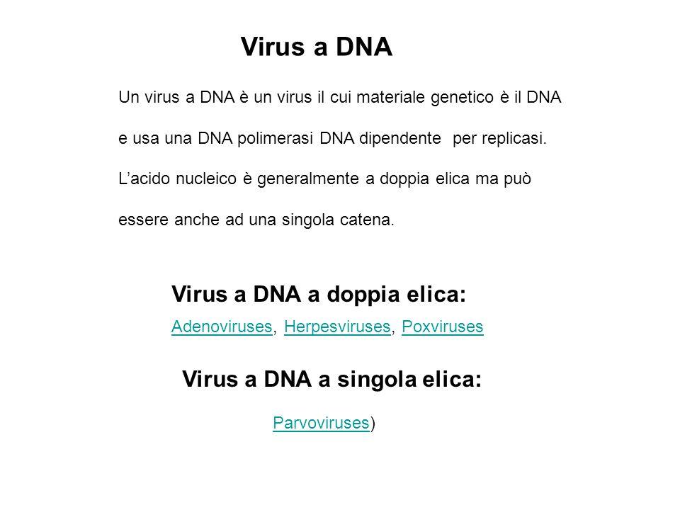 Virus a DNA Un virus a DNA è un virus il cui materiale genetico è il DNA e usa una DNA polimerasi DNA dipendente per replicasi.
