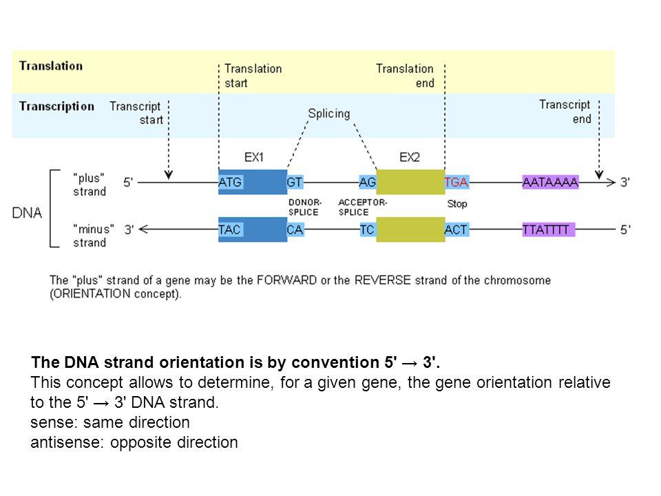 Farmaci antivirali per virus a DNA
