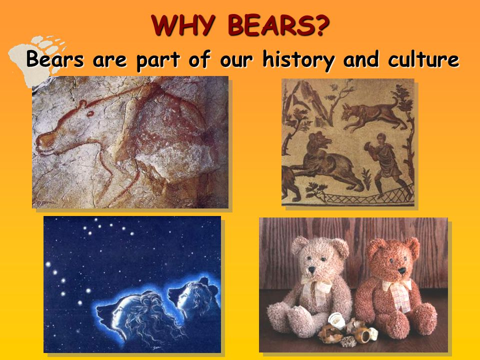 WHY BEARS? Bears are part of our history and culture