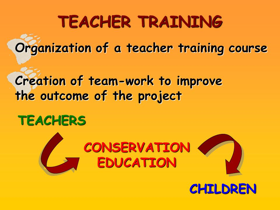 TEACHER TRAINING Organization of a teacher training course Creation of team-work to improve the outcome of the project CHILDREN CONSERVATION EDUCATION