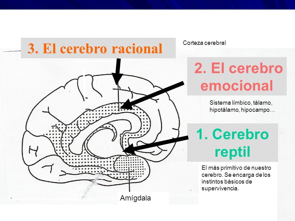 1. Cerebro reptil 2.