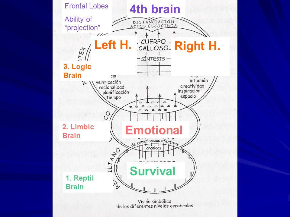 Survival 1. Reptil Brain 2. Limbic Brain 3.