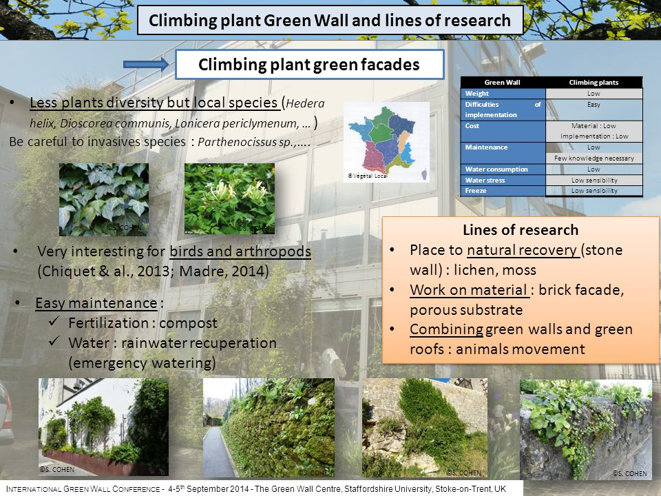 I NTERNATIONAL G REEN W ALL C ONFERENCE - 4-5 th September 2014 The Green Wall Centre, Staffordshire University, Stoke-on-Trent, UK Less plants diversity but local species ( Hedera helix, Dioscorea communis, Lonicera periclymenum, … ) Be careful to invasives species : Parthenocissus sp., ….