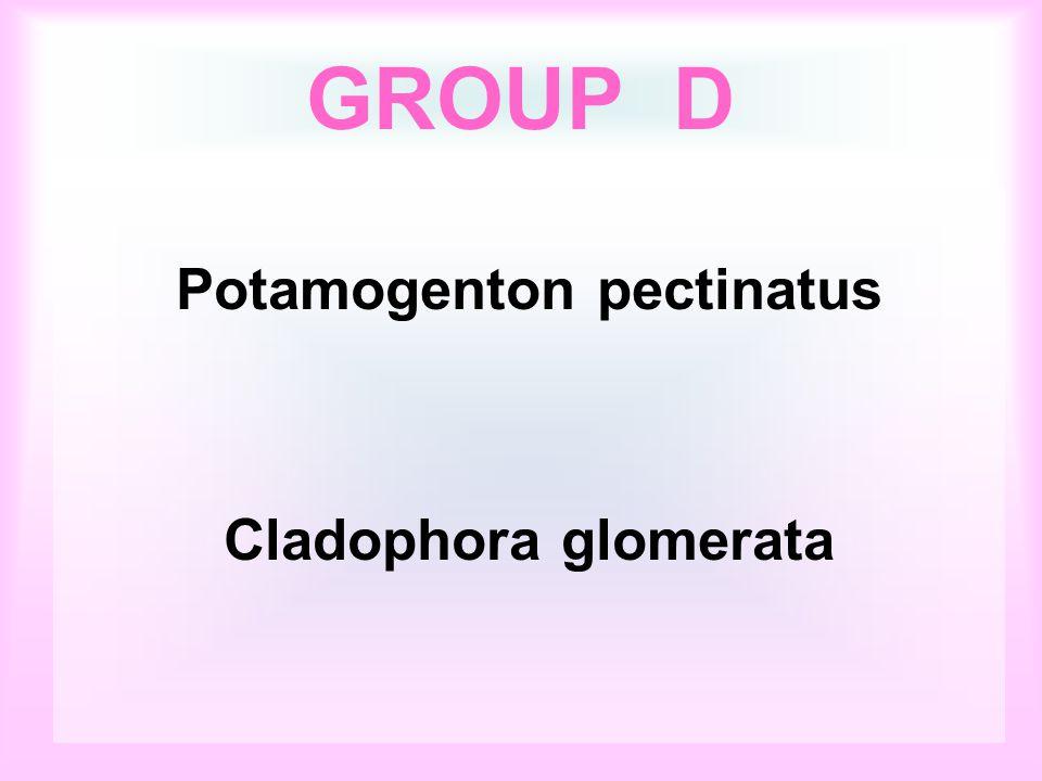 Potamogenton pectinatus Cladophora glomerata GROUP D