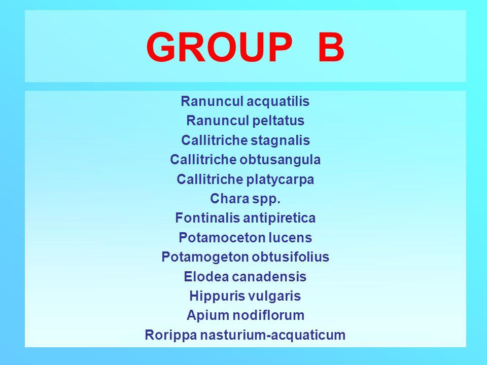 GROUP B Ranuncul acquatilis Ranuncul peltatus Callitriche stagnalis Callitriche obtusangula Callitriche platycarpa Chara spp. Fontinalis antipiretica