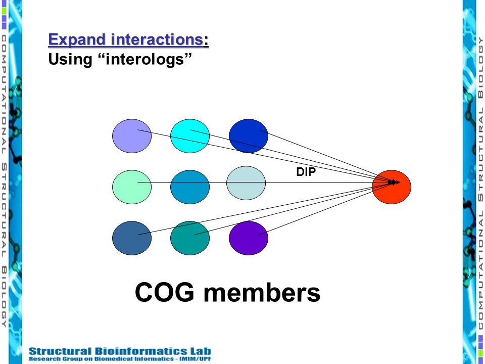 Expand interactions: Using interologs DIP COG members