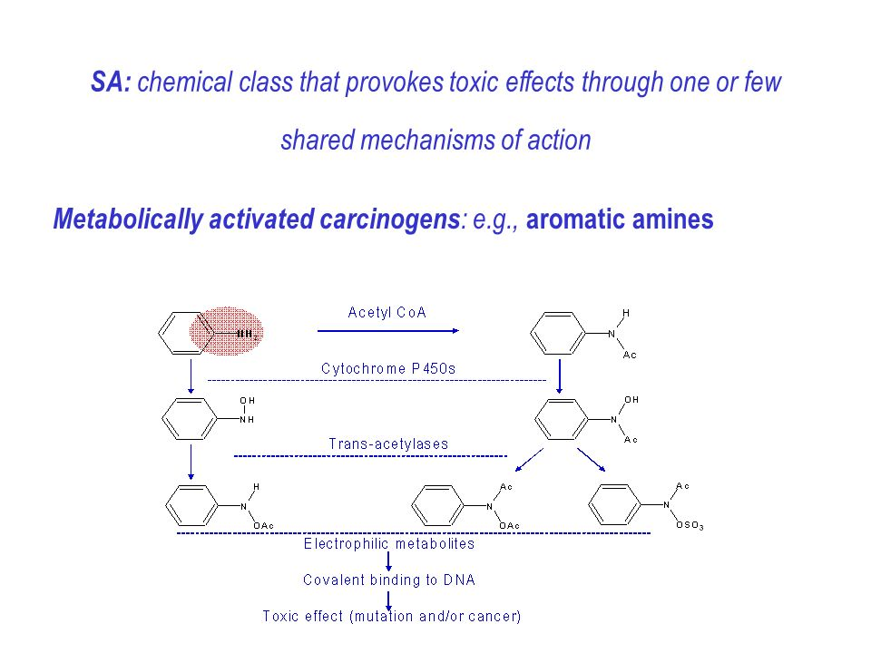 Metabolically activated carcinogens : e.g., aromatic amines SA: chemical class that provokes toxic effects through one or few shared mechanisms of action