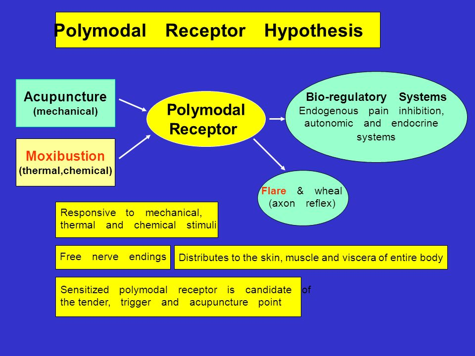 Polymodal Receptor Hypothesis Polymodal Receptor Bio-regulatory Systems Endogenous pain inhibition, autonomic and endocrine systems Acupuncture (mechanical) Moxibustion (thermal,chemical) Responsive to mechanical, thermal and chemical stimuli Free nerve endings Flare & wheal (axon reflex) Sensitized polymodal receptor is candidate of the tender, trigger and acupuncture point Distributes to the skin, muscle and viscera of entire body