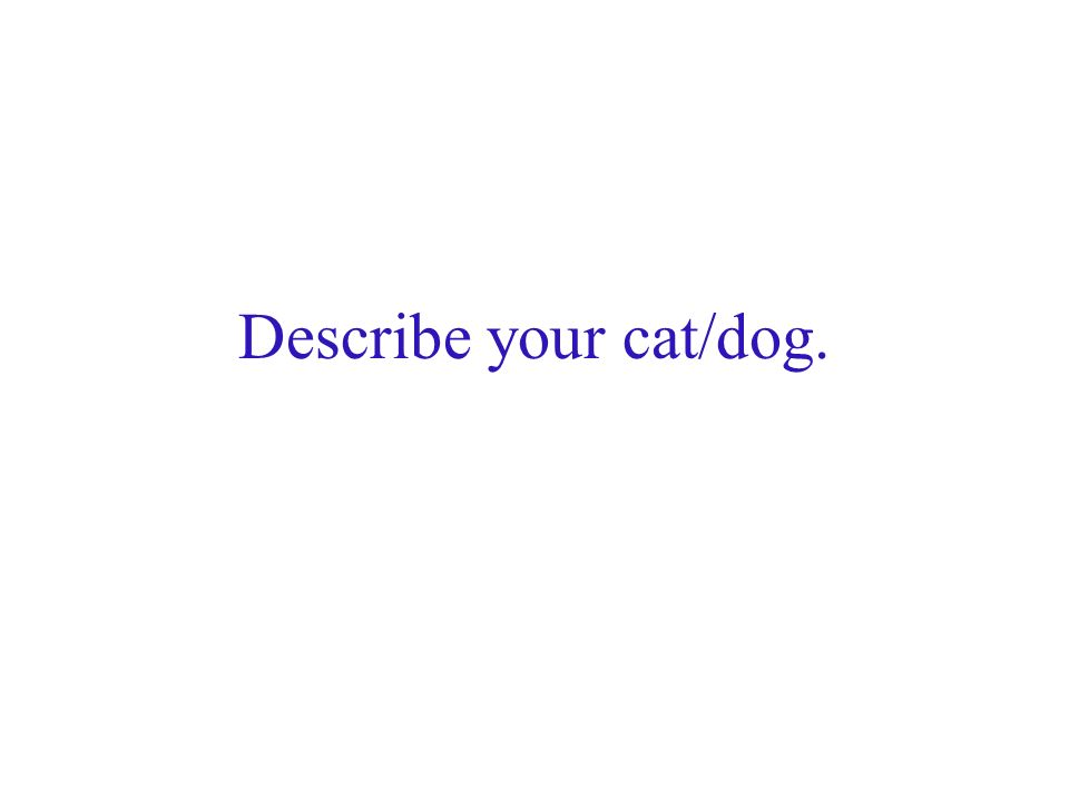 Describe your cat/dog.